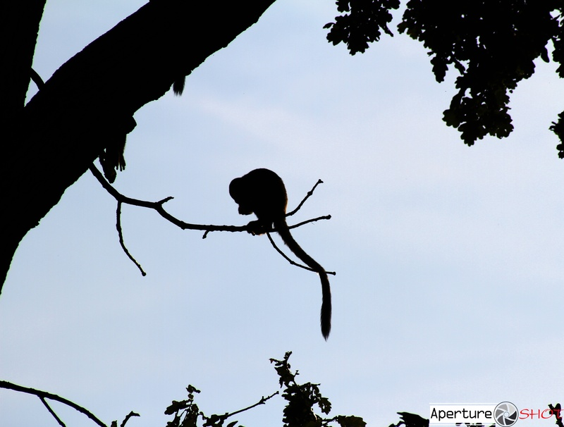 Monkey-Silhouette Style