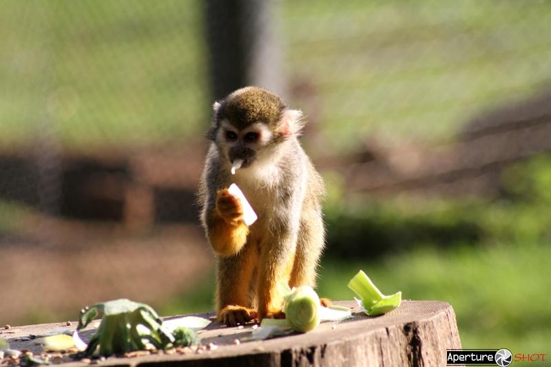 Monkey-Food