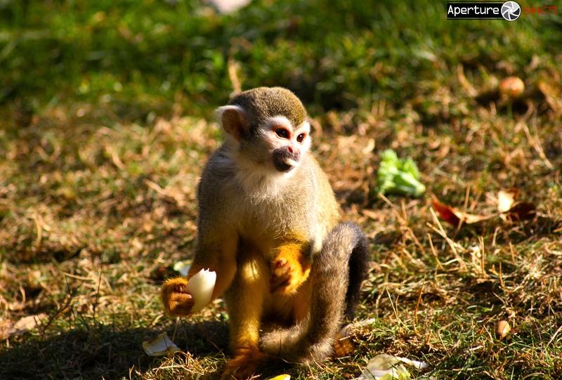 Monkey-Food 1